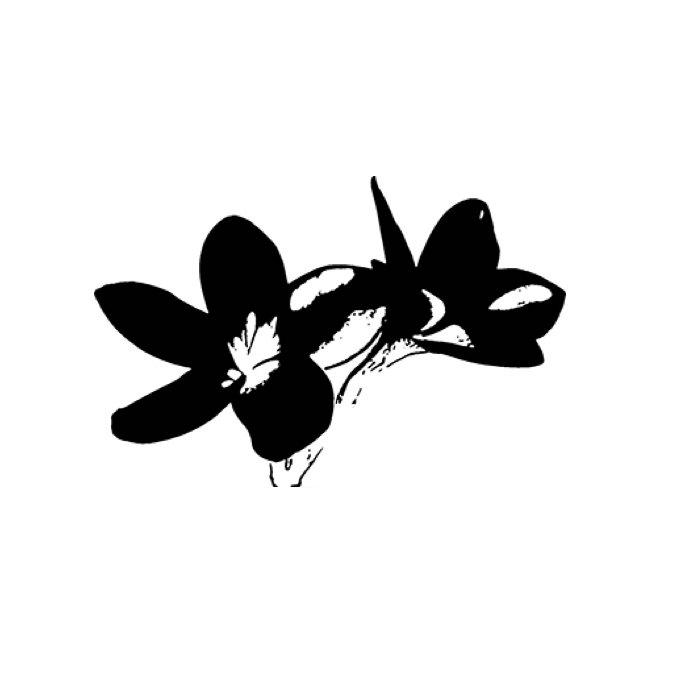 plumelia-logo